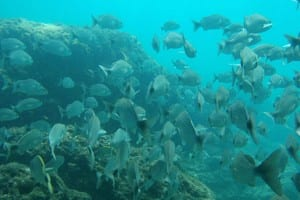 scuba diving off of Isla Tortuga